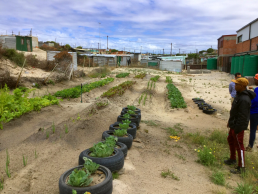 Market garden in Khayelitsha, Cape Town, South Africa. Credit: Ivan Turok, Human Sciences Research Council.