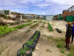 Market garden in Khayelitsha, Cape Town, South Africa. Credit: Ivan Turok, Human Sciences Research Council.