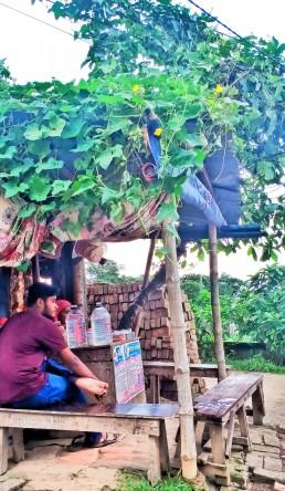 A touch of green, Vatara, Bangladesh. Credit: Tahmina Sultana.